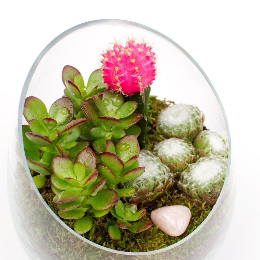 Glass Vase Terrarium 12pcs